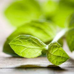 Green Vegetable & Mint Salad